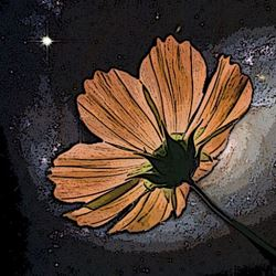 First Flower to Bloom in Outer Space