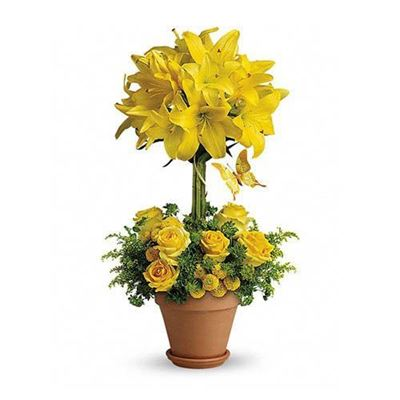 Picture of Yellow Fellow
